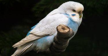 Kuşlarda Soğuk Algınlığı ve Tedavisi