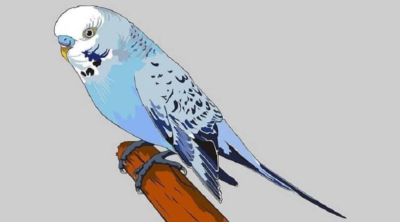 Muhabbet Kuşu İsimleri