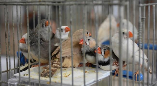 Hint Bülbülü Kafes Seçimi
