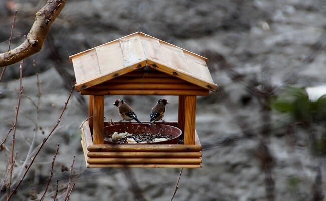 Saka Kuşu Kafes Düzeni