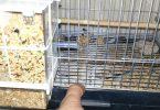 Kuş ve Kafes Temizliği Nasıl Yapılmalı?