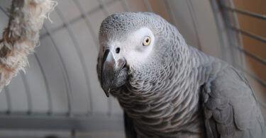 Jako Papağanı Kafesi Nasıl Olmalı?