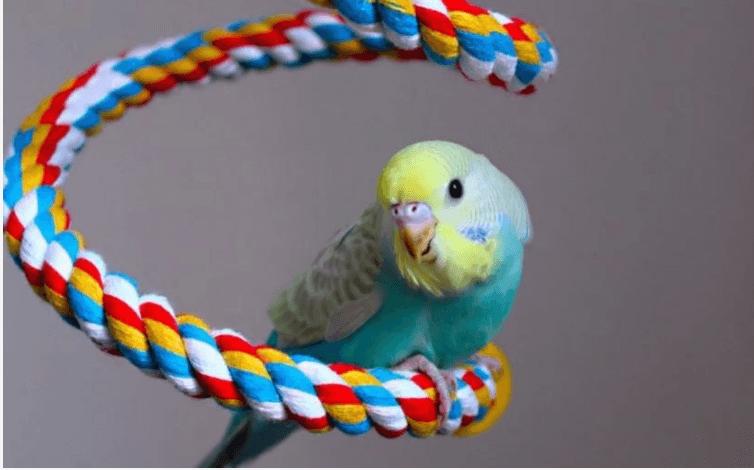 muhabbet kuşu aksesuarları