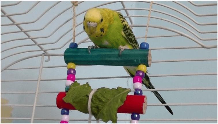 muhabbet kuşu salıncağı