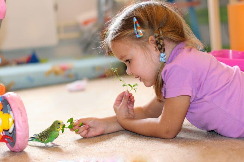 Papağanlara Verilebilecek Sebzeler