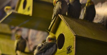 Çocuklar İçin İdeal Kuş Türleri