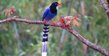 Egzotik Evcil Kuş Türleri