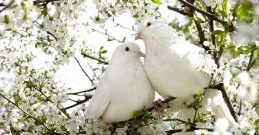 Popüler evcil kuş türleri hakkında bilgi arıyorsanız, en doğru adrestesiniz! Çünkü bugünkü yazımızda bu konuyu ele alıyoruz. Arkadaş canlısı