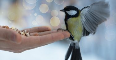 Evcil Kuşlar İçin mama