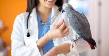 Kuşlardan insanlara bulaşan ne yazık ki birçok hastalık türü var. Ayrıca hayvanlardan insanlara geçebilen hastalıklara zoonotik hastalıklar