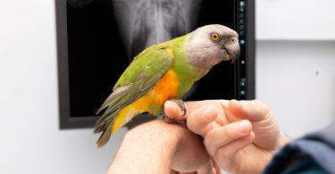 kuşlar en çok nelerden hoşlanır