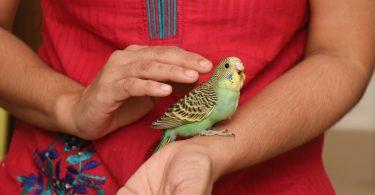 kuşlarla bağ kurmak