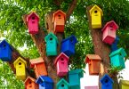 Evde Yapabileceğiniz Kuş Oyuncakları