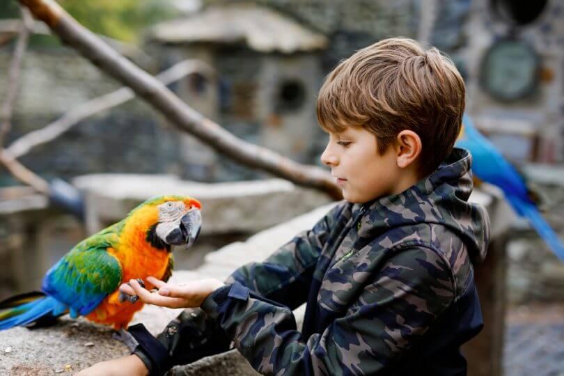 Kuş Almak İsteyenlerin Bilmesi Gerekenler