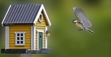 Kuşlar İçin Evde Yapılabilecek Oyuncaklar