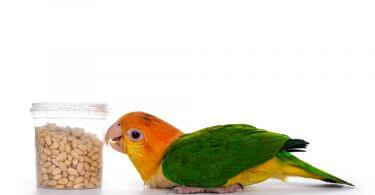 Kuşlarda Bağışıklığı Güçlendiren Besinler