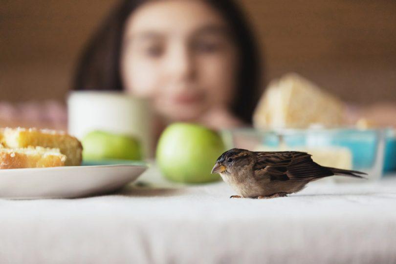 kuş beslemek için nedenler