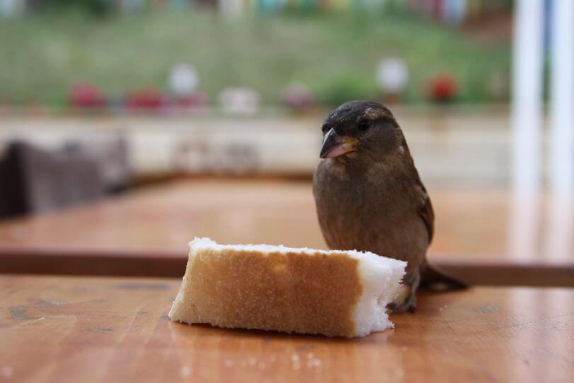 Kuşların Sevdiği 10 Sağlıklı Besin