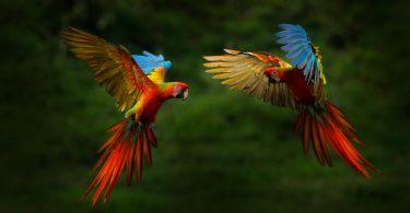 Kuşlar İle Dostluk Kurmak