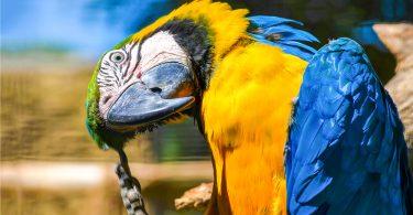 Kuşlar birbirlerine nasıl alışır