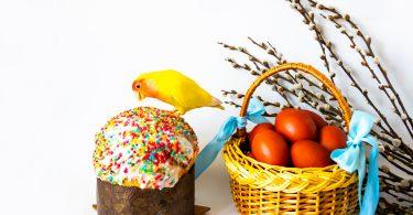papağan yumurta yer mi