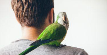 kuşların çığlık atma nedenleri