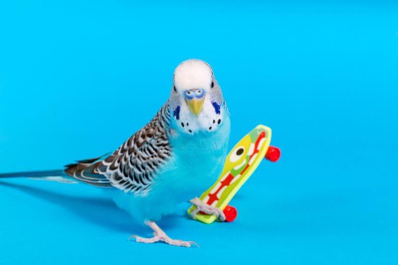 kuş tırnağı kesilir mi