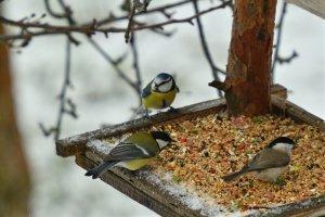 kuşlar için kolay mama tarifi