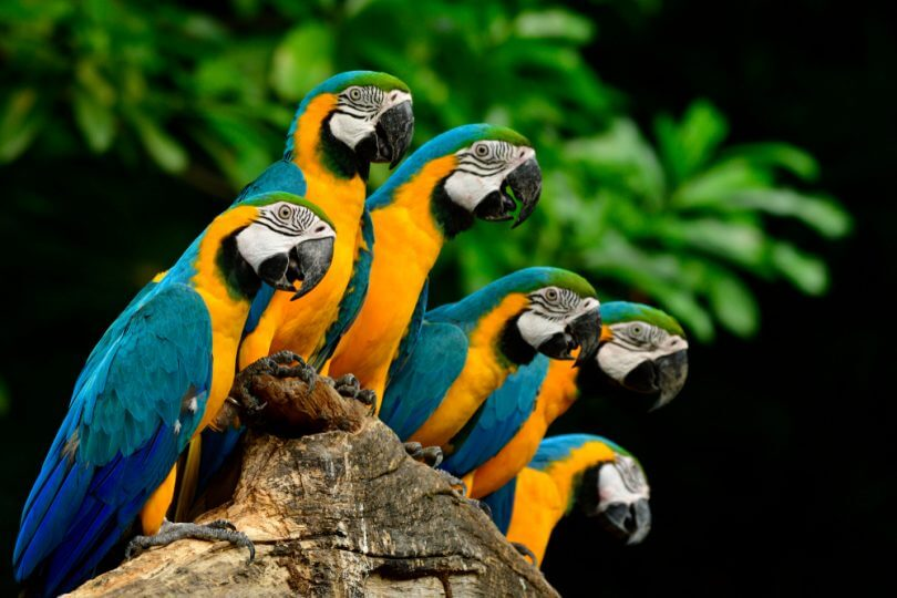 papağan konuşma eğitimi