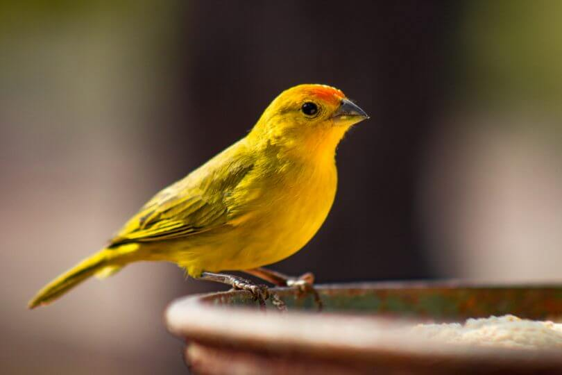 kuşlarda kilo kaybı