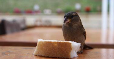 kuşlar için doğal besinler