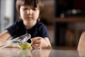 muhabbet kuşu ile oyun