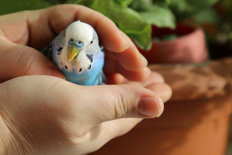 kuşlar neden ısırır