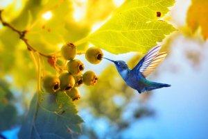 papağanlar hangi meyveleri yer