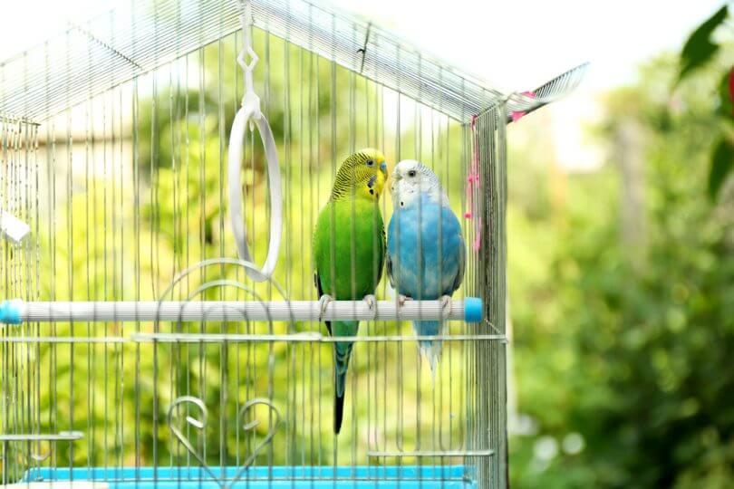 kuş kafesi örtmek