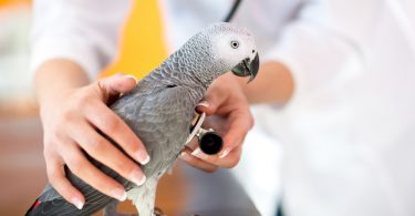 kuş veterineri seçini