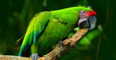 hasta kuş nasıl anlaşılır