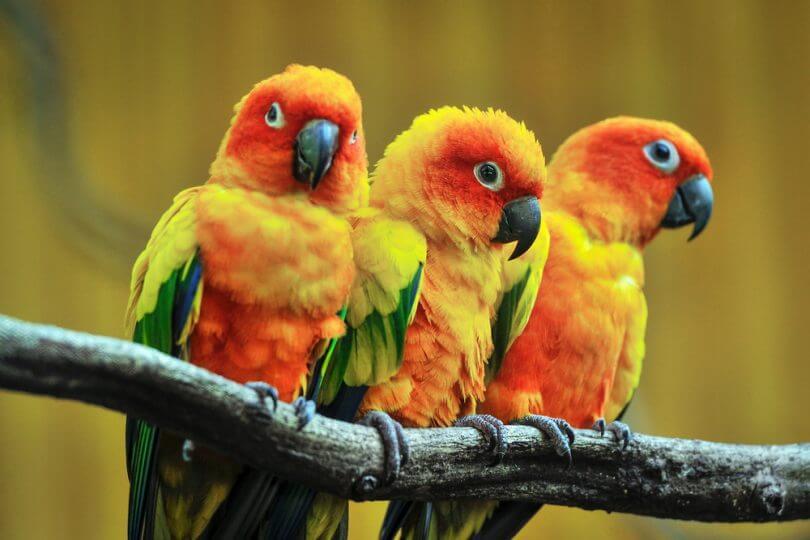 papağanların ortalama ömrü