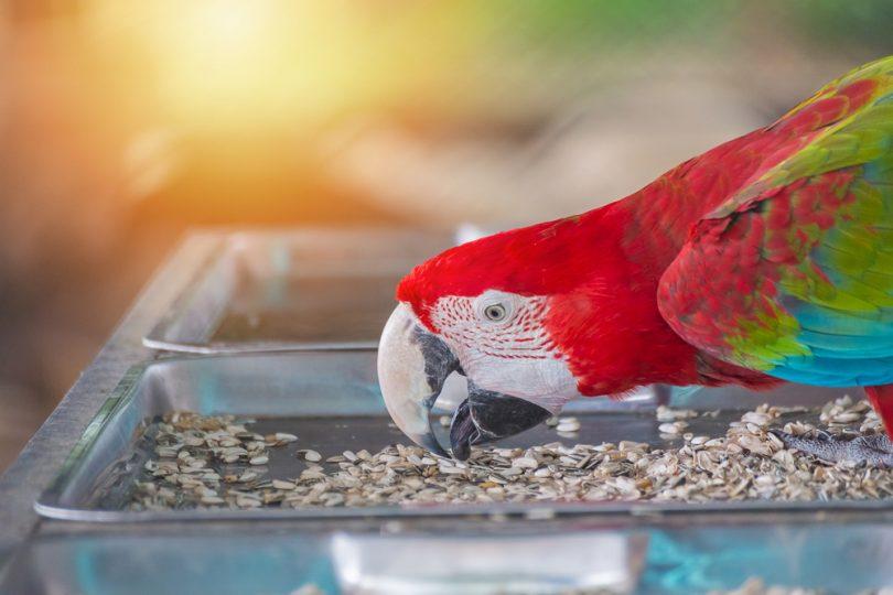 kuşlarda stres belirtileri