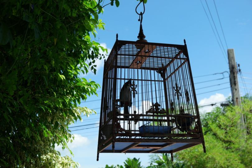 kuş kafesi yapmak