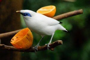 papağanlar ne yer
