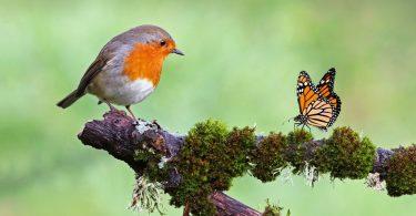 yabani kuş nasıl evcilleştirilir