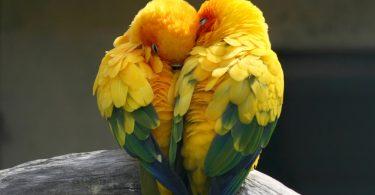 Çalışanlar için en ideal kuş türleri , yoğun iş hayatına rağmen kuş sahiplenmek isteyen kişiler tarafından oldukça merak edilir. Çoğu kuş,