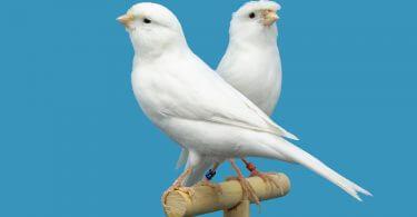 doğru kuş seçimi