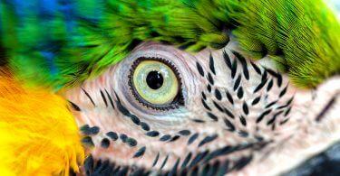 Kuş Gözü İğneleme Nedir