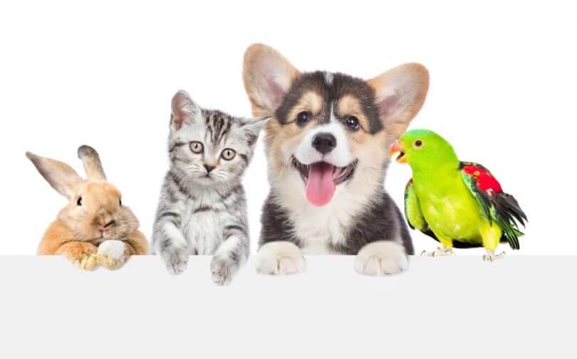Kuşlar Neden Kedi ve Köpeklerden Daha İyi Bir Evcil Hayvan