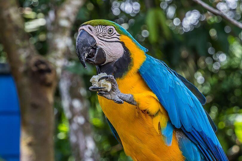 Kuşlar ve İnsanlar İçin Ortak Besinler