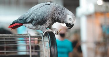 Kuşunuzu Neden İçeride Tutmalısınız