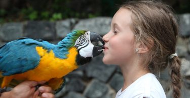 Papağanlar ve Çocuklar