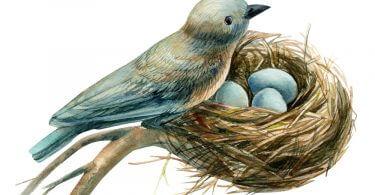 Kuş Yumurtlarsa Ne Yapmalıyız